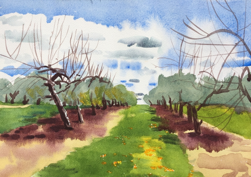 Apple Trees 10